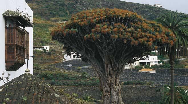 Villes et villages de Tenerife, Espagne: Icod de los Vinos ...