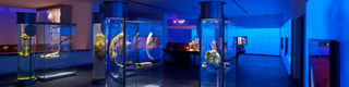 Underwater cultural heritage exhibition. National Underwater Archaeology Museum (ARQUA) © Ministry of Education, Culture and Sport