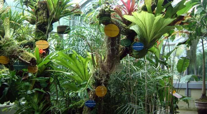 Royal botanical garden gardens in madrid at spain is culture for Jardin botanico u de talca