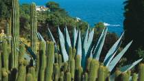 Santa Clotilde: a view of cacti and vegetation with the sea in the background. Lloret de Mar, Gerona © Turespaña
