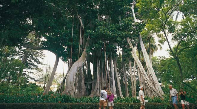 La orotava acclimatisation gardens gardens in puerto de la cruz tenerife at spain is culture - Botanical garden puerto de la cruz ...