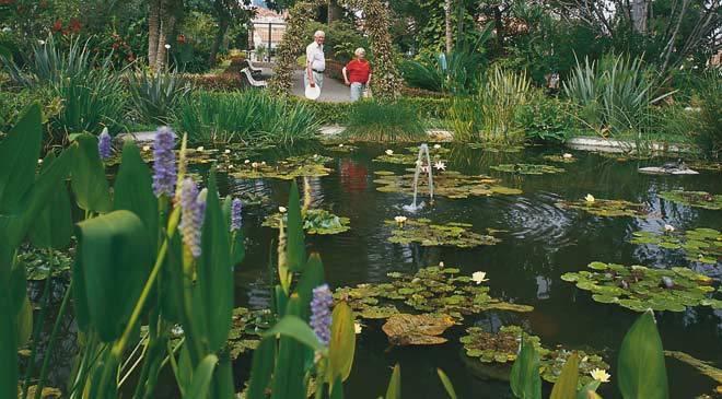 Jardin d acclimatation de la orotava jardins puerto de for Jardin caleta tenerife sur