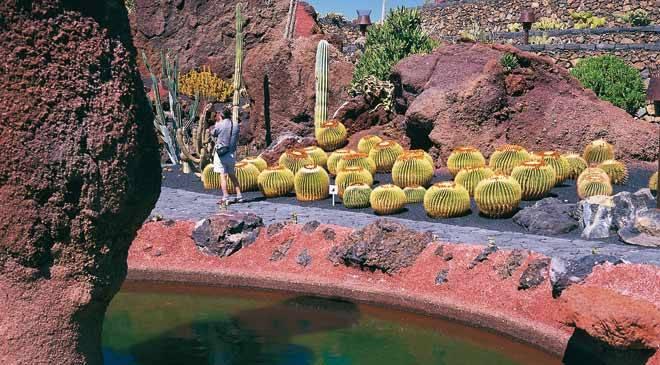 cactus garden guatiza teguise lanzarote turespaa