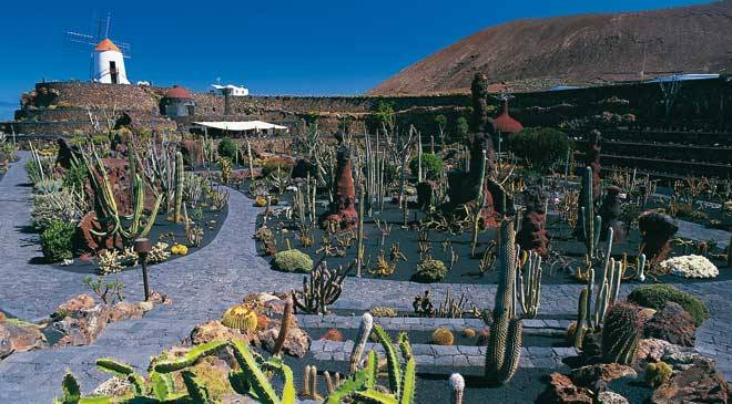 cactus garden gardens in teguise lanzarote at spain is. Black Bedroom Furniture Sets. Home Design Ideas