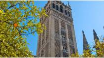 Partial view of the La Giralda tower amid the orange trees of the Orange Tree Courtyard at the Holy Metropolitan and Patriarchal Cathedral of Seville.