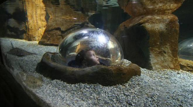 Gij N Aquarium Museums In Gij N Asturias At Spain Is