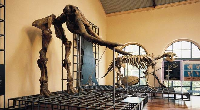 Skeletons from the Quartenary period in the National Natural Science Museum. Madrid © Turespaña