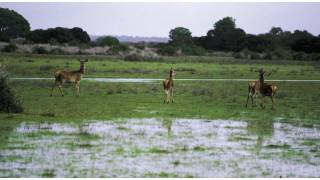 View of the Doñana national park, with deer. Cadiz © Turespaña