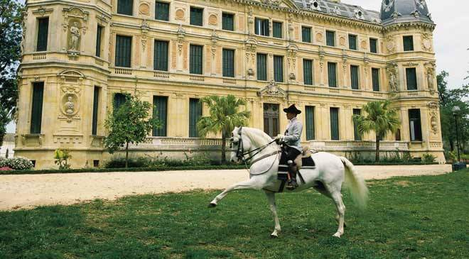 Andalusian horse in the courtyard of the Las Cadenas Palace. Royal Andalusian School of Equestrian Art. Jerez de la Frontera, Cadiz © Turespaña